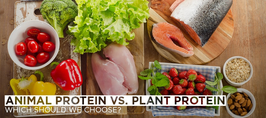 Animal Protein vs. Plant Protein -Which Should We Choose